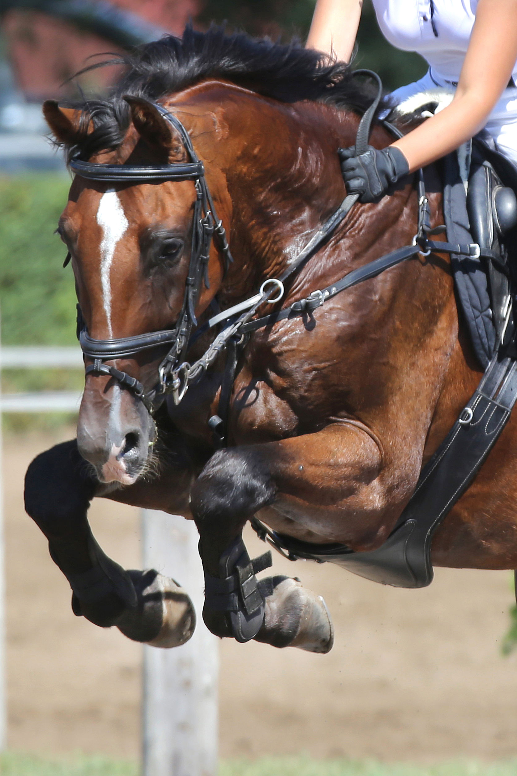 Fitness and Horseback Riding
